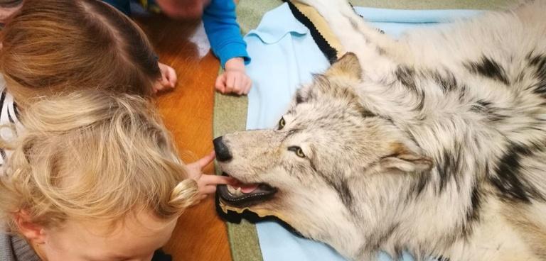 Wolfsunterricht im Kindergarten