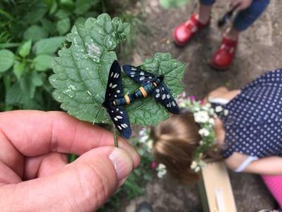 Schmetterlinge