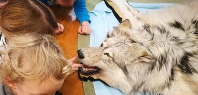 Grauwolf.jpeg