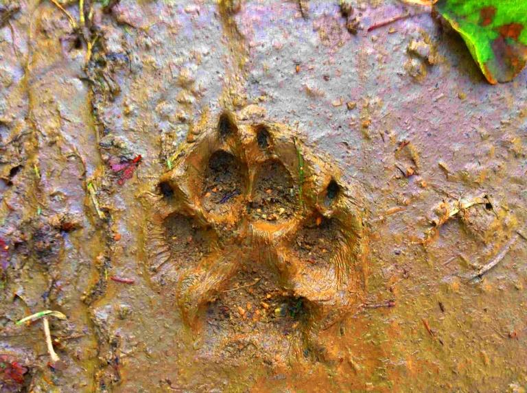 Canis lupus lupus               ⓒ Zuba Marcus