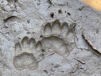 Auf Spurensuche mit dem Wildbiologen