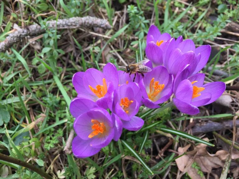 Frühling im Hagenbrunner Wald 2018