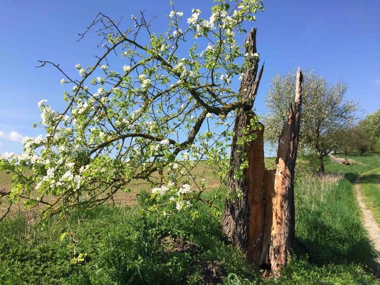 Frühlingswanderung - Hagenbrunner Wald