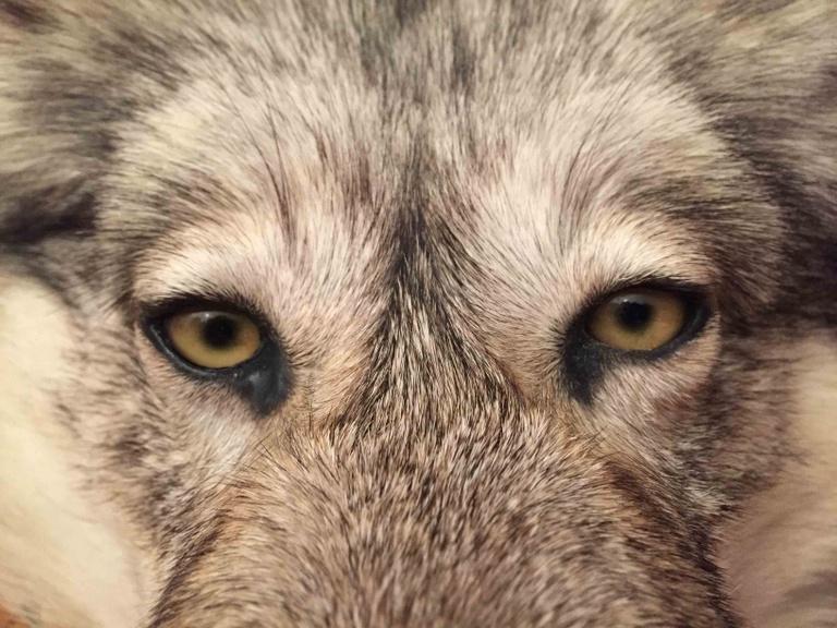Wolfsgruben-und-Frauenhaar_(c)Marcus-Zuba.jpg